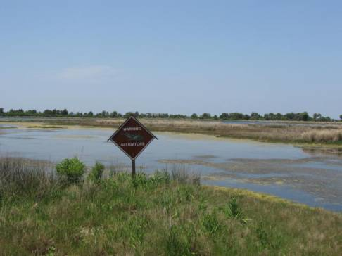 Photo by H.S. Cooper © Alligator Warning Sign